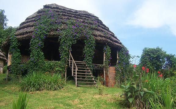 Cuckooland Bwindi
